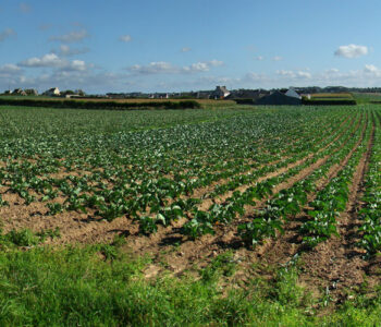 farmland in Brittany