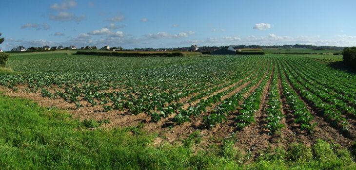 farmland in Brittany
